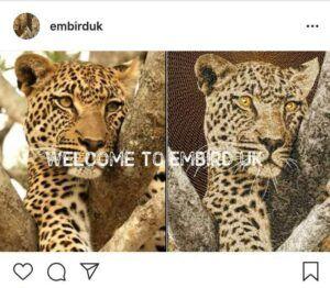 Embird-UK-Instagram